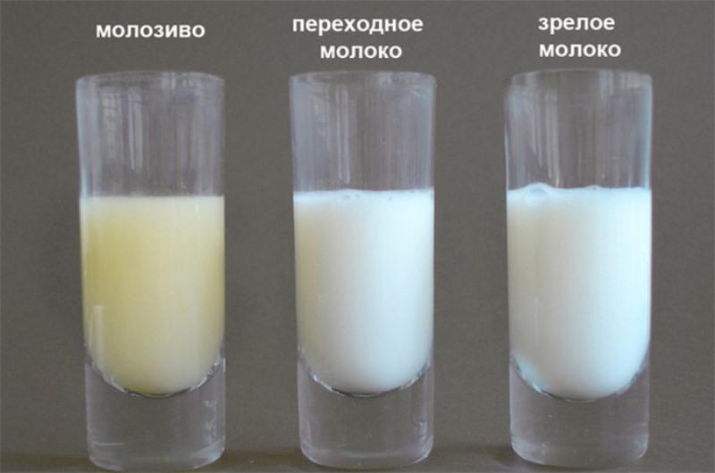 Как проверить жирность грудного молока и повысить ее с помощью питания