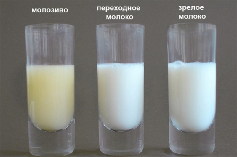 Как сделать грудное молоко питательным