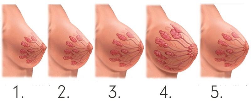 Как выглядеть грудь беременной